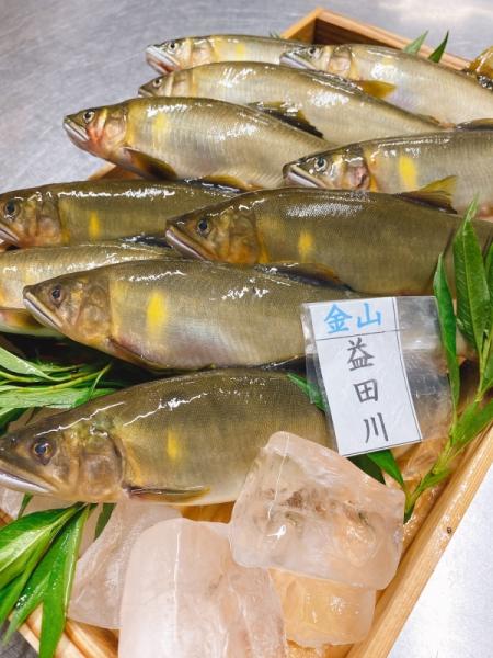 益田川の大鮎